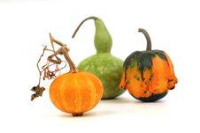 Three Decorative Pumpkins Stock Images