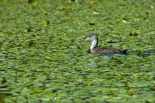 Free Bird Royalty Free Stock Image - 6391856