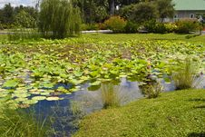 Free Lily Pond Royalty Free Stock Images - 6392199
