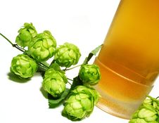 Free Beer And Hop-plant Stock Photography - 6392452