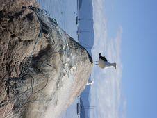Free Gull Stock Image - 6392811