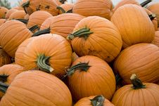 Free Pile Of Pumpkins Stock Photo - 6394330
