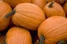 Free Pile Of Pumpkins Stock Photography - 6394332
