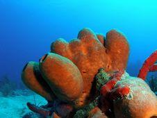 Free Tube Sponge Stock Image - 6395271