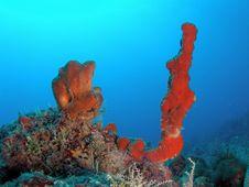 Free Red Sponge And Tube Sponge Stock Photo - 6395320