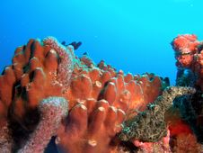 Brown Tube Sponge Royalty Free Stock Images