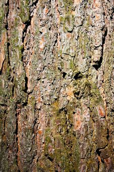 Free Tree Bark Royalty Free Stock Images - 6396039