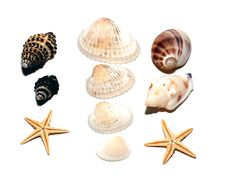 Free Cockleshells On A White Background Royalty Free Stock Photo - 6396445