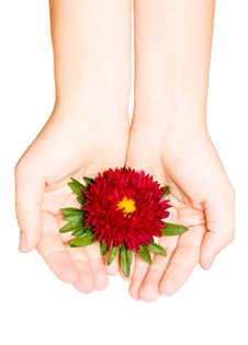 Free Red Flower In Female Hand Royalty Free Stock Photography - 6396597