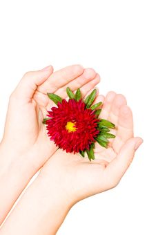 Free Red Flower In Female Hand Royalty Free Stock Images - 6396599