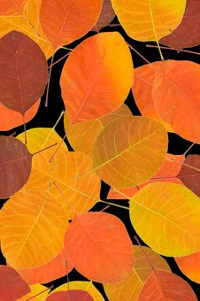 Free Color Leaves Isolated Stock Photo - 6396600