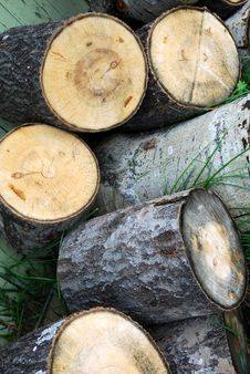Cut Birch Logs Royalty Free Stock Photos