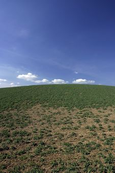 Free BACKGROUND OF SKY AND GRASS Royalty Free Stock Photo - 6396765