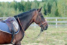Free Horse Royalty Free Stock Photo - 6397045
