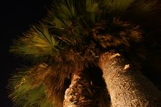 Free Nightly Palms Royalty Free Stock Image - 6397086