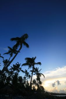 Free Evening Tropics Stock Photography - 6397122