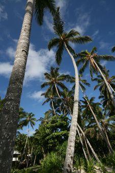 Free Palm On Blue Sky Stock Photo - 6397140