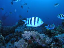 Free Coral Scene Stock Image - 6398111