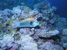 Free Sea Fish Stock Photography - 6398122
