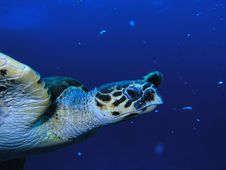 Free Sea Turtle Stock Images - 6398964