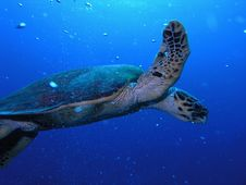 Free Sea Turtle Stock Photo - 6398970