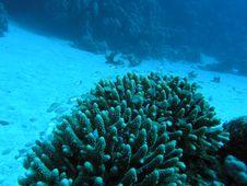 Free Coral Scene Stock Image - 6399121