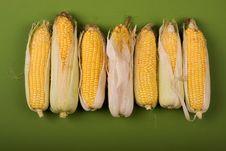 Free Corn Ear Stock Photography - 6399442