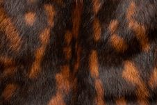 Free Black-and Red Spotted Fur Texture Royalty Free Stock Photography - 6399827