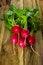 Free Large Bunch Of Fresh Radish Stock Photos - 63960993