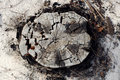 Free Dry Chopped Tree Stock Photo - 641870