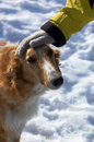 Free Dog Head And Hand In Winter Stock Images - 644534
