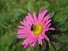 Free Bee On The Flower Stock Photography - 640542