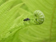 Free Bug On The Fern Royalty Free Stock Photo - 640545