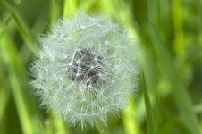 Free Dandelion Stock Photography - 641112