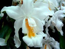 Free White Tropical Flower Stock Photo - 642160