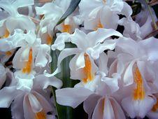 Free White Cascading Flowers Stock Image - 642161
