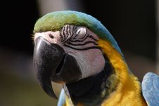 Free Macaw Royalty Free Stock Image - 642336