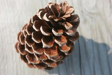 Free Pine Cone Royalty Free Stock Photos - 642698