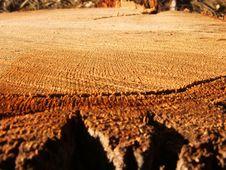 Free Tree Stump Royalty Free Stock Photos - 643338