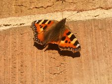 Free Butterfly On A Brick Wall Stock Photography - 644472