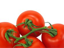 Tomatoes With Clipping Path Royalty Free Stock Photo