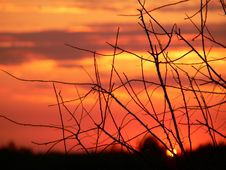 Free Sunset Royalty Free Stock Photography - 645707