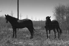 Free 2 Horses Stock Photo - 646410