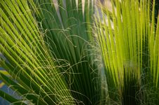 Free Palm Tree Leaves Royalty Free Stock Image - 646906