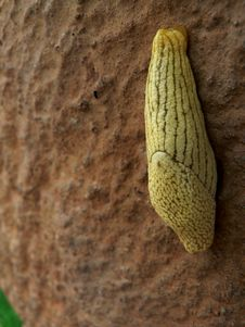 Slug - Yellow On Wall Stock Photos