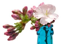 Free Blooming Branch In A Blue Bottle (Front View) Royalty Free Stock Photos - 648028