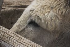Free Donkey On A Farm Royalty Free Stock Image - 648096