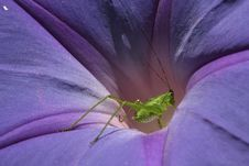 Free Katydid Royalty Free Stock Photo - 648745