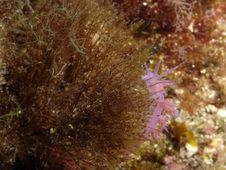 Free A Snail - Purple Royalty Free Stock Photo - 648935