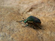 Free Green Bug Stock Photography - 649332